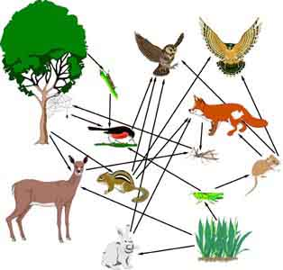 How to Make a Food Web of the Lorax